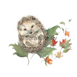Mr Prickles Hedgehog by Sarah Reilly Suffolk Artist Love Country UK