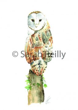 Barn Owl by Sarah Reilly Suffolk Artist Love Country UK