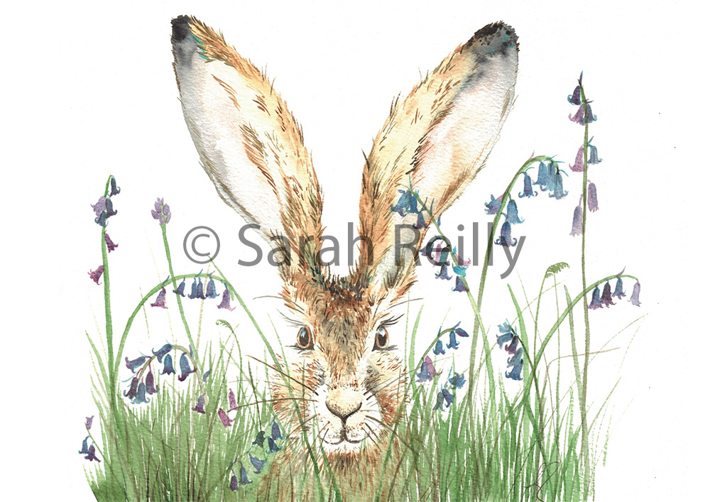 Curious Hare by Sarah Reilly Suffolk Artist Love Country UK