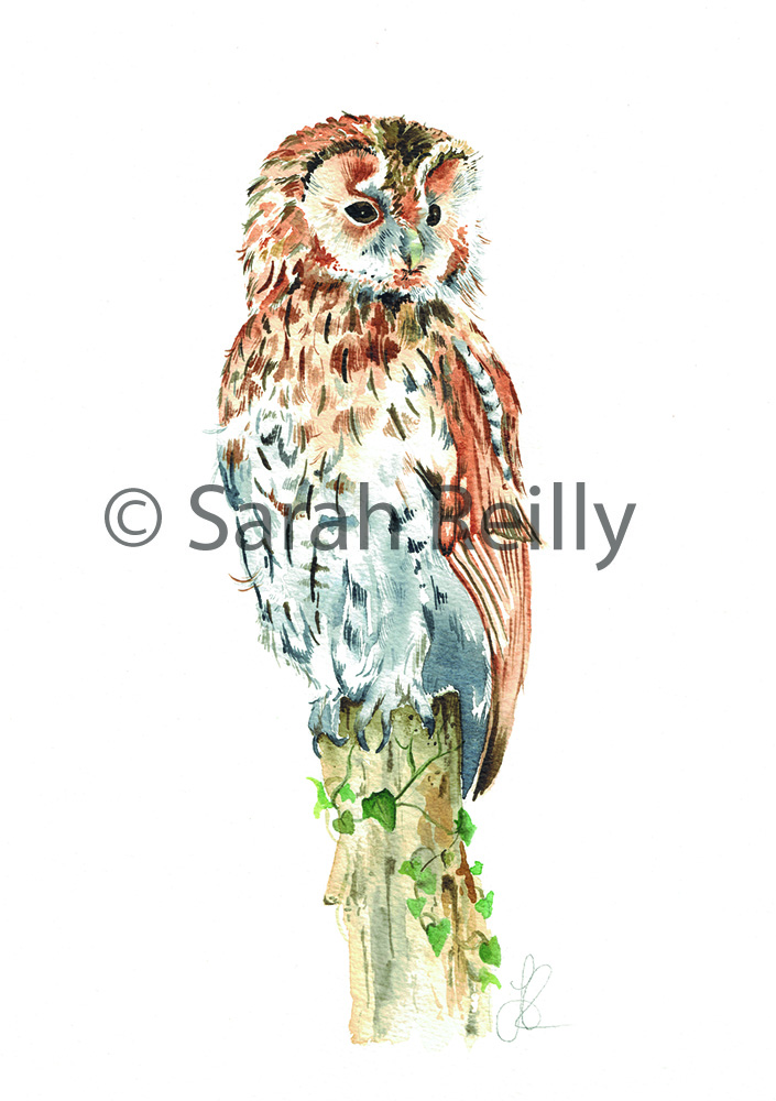 Tawny Owl by Sarah Reilly Suffolk Artist Love Country UK
