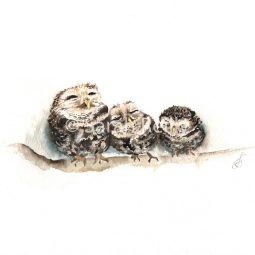 Sleepy Little Owls by Sarah Reilly, Suffolk Artist, Love Country UK